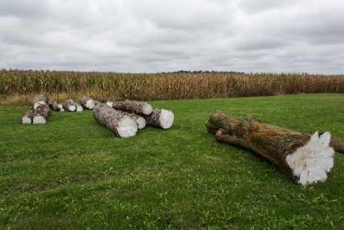 Log-6
