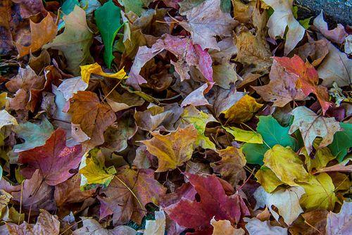 Leaves-1