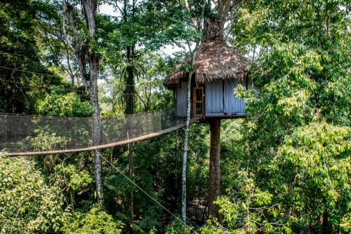 Treehouse-176