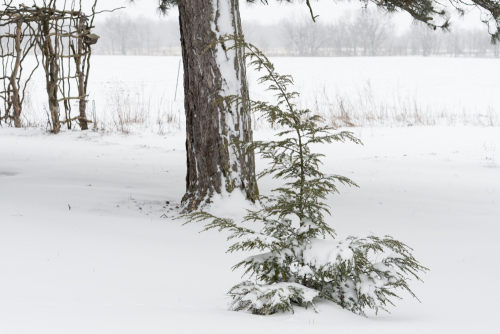 SnowMar21-9