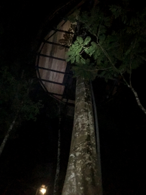 Treehouse-55