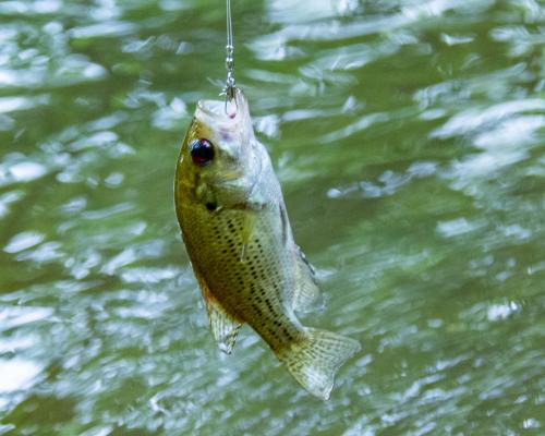 Fish-93