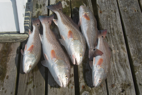 Fishing-50