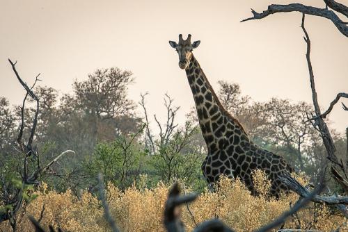 Giraffekill-12