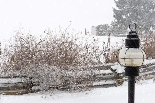 Snow-27