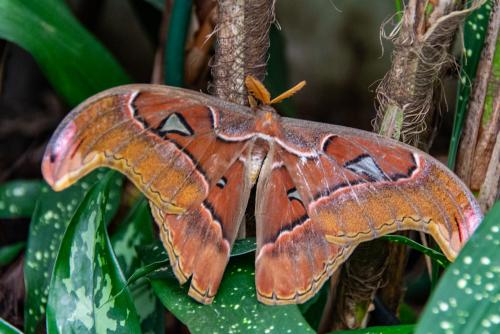 Butterfly-48