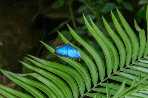 Butterfly-49