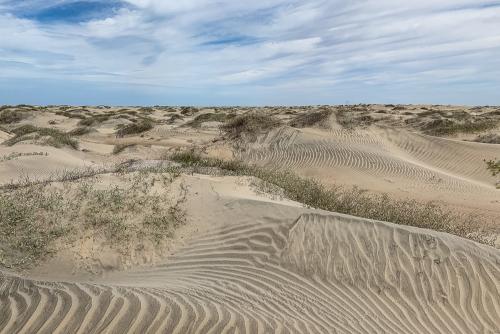 Sand-50