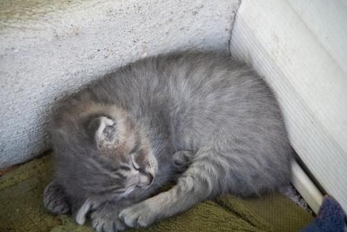 Kittens-4