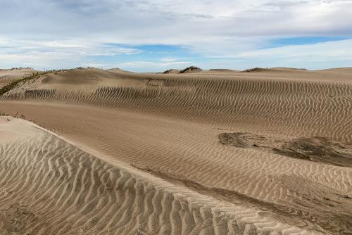 Sand-36