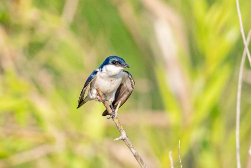 Birds-104