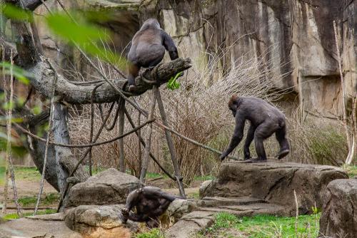 Zoo-27