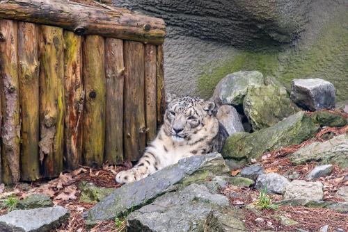 Zoo-36