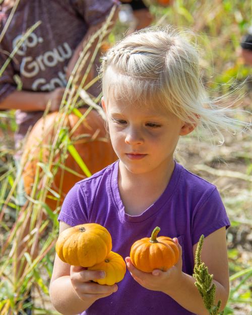 Pumpkins-23