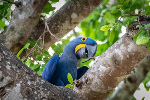 Macaw-14