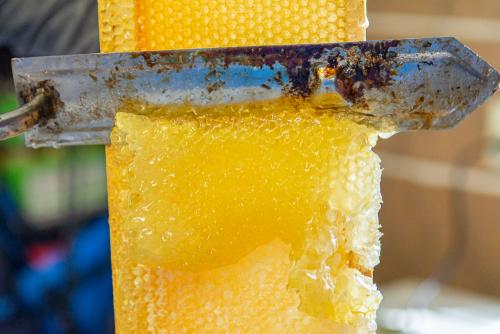 Honeycider-2