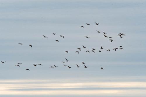 Cranes-20