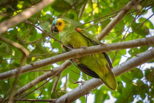 Parrot-16