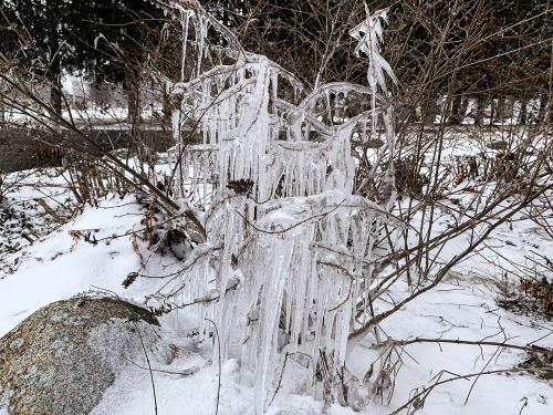 Ice sculpture-1