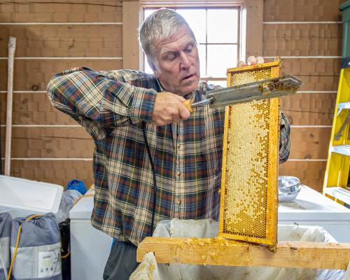 Honey-2