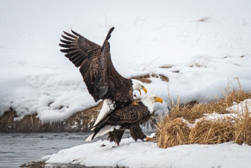 Eagles-12