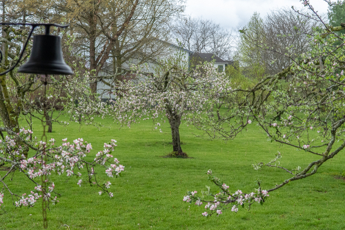Appletrees-2