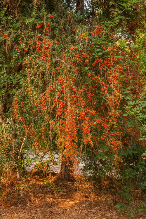 Magnolia-82