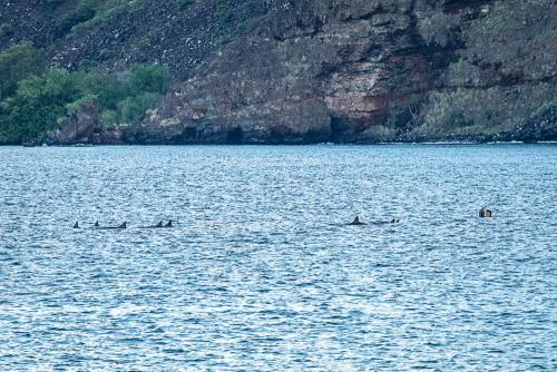 Dolphinskekealakekuabay-3