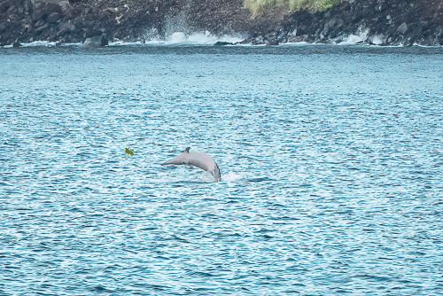 Dolphinskekealakekuabay-12