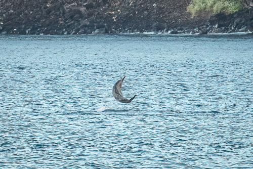 Dolphinskekealakekuabay-14