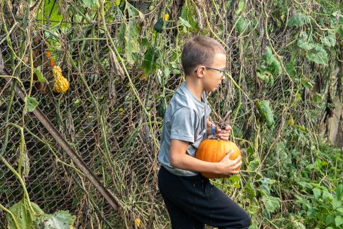 Pumpkin-36