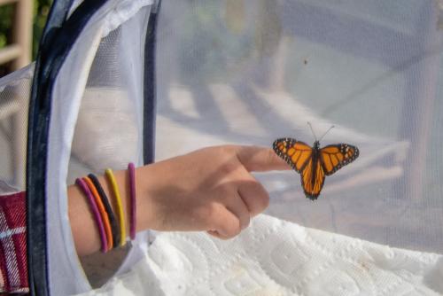 Monarch-29