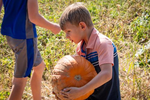 Pumpkin-6
