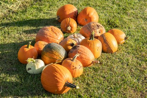 Pumpkin-72