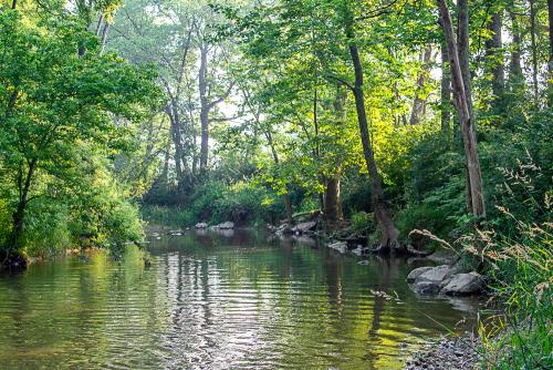 Creek-28