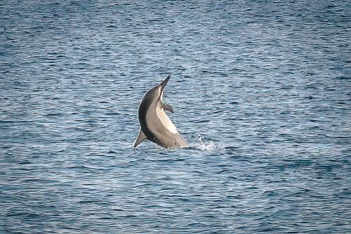 Dolphinskekealakekuabay-22