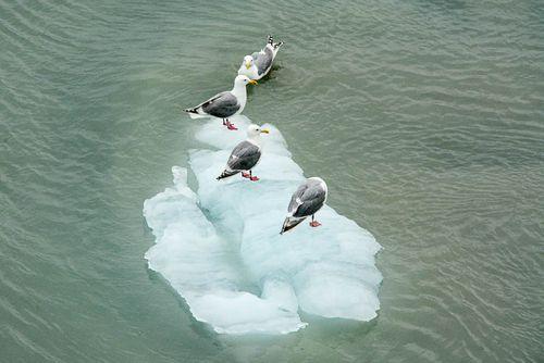 Iceberg Chillin'
